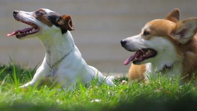 Hondenpenning Bot geponst met sleutelringsetje
